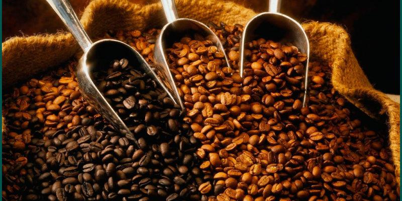 Самые редкие и дорогие сорта кофе
