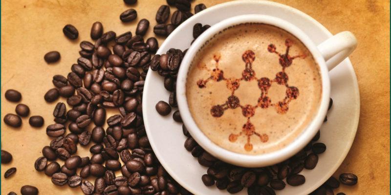 Как лучше собирать кофе для кафе: руки или машина
